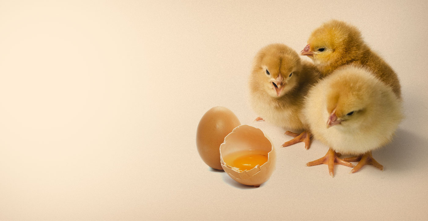 Fresh Eggs for YouEVERYDAY!